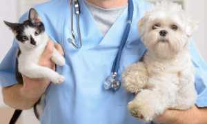 Кровоостанавливающие препараты для кошек