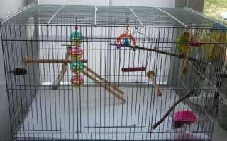 Оборудование клетки для волнистого попугая