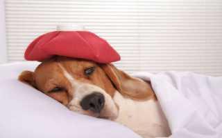 Средний отит у собак