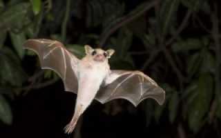 День летучих мышей