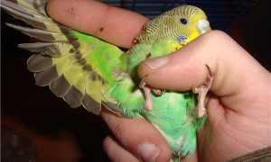 Как убить попугая