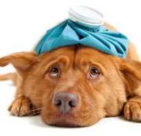 Противовоспалительные средства для собак