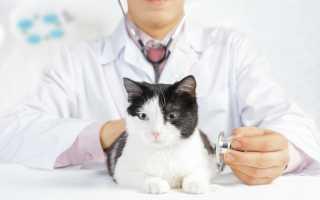Кошка часто мочится с кровью