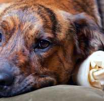 Воспаление поджелудочной у собаки симптомы