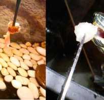 Как часто нужно кормить красноухих черепах