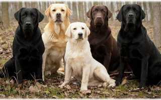 Служебные собаки виды службы