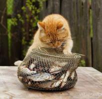 Какой рыбой можно кормить кота