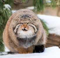 10 редких животных красной книги