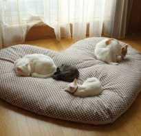 Как сшить кроватку для кошки