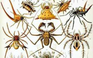 Жизнь пауков в природе