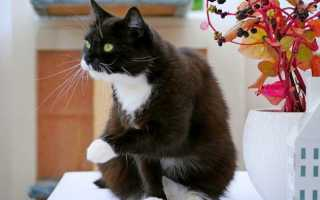 Модные стрижки котов