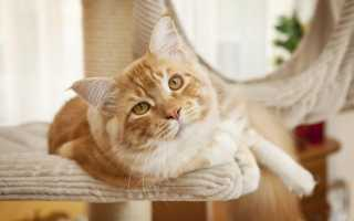 Стрижка кота на лето