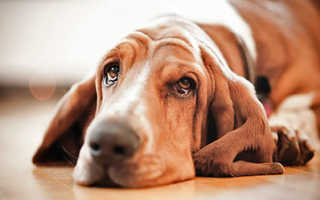 Капли против блох для собак