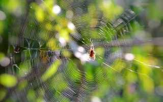 Куда относится паук