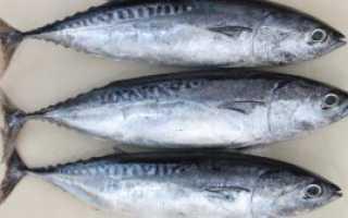 Тунец морская рыба