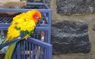 Попугай какает водой