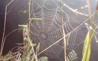 Прочность паутины паука