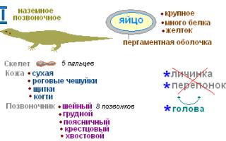 Части тела ящерицы