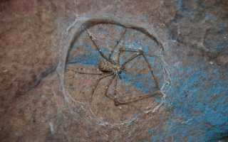 Отряд пауки характеристика