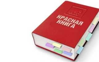 Белые страницы красной книги россии животные