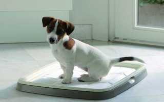 Как приучить собаку к лотку дома