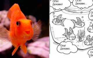 Сколько помнит рыба