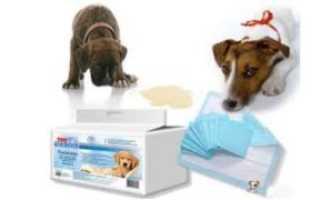Как приучить двухмесячного щенка к пеленке
