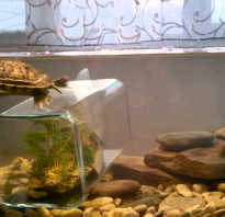 Какая вода нужна для красноухой черепахи