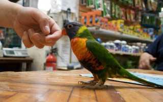 Попугай кусает пальцы