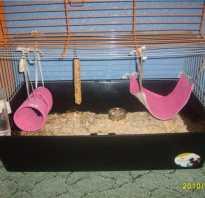 Гамачок для морской свинки
