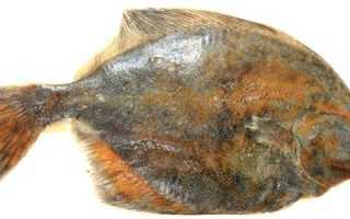 Палтус что за рыба