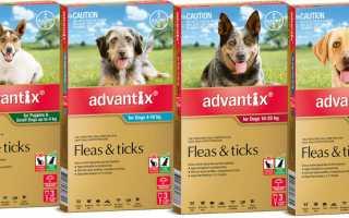 Капли от блох для собак адвантикс