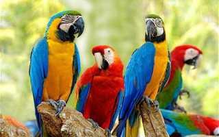 Попугай ара зеленый
