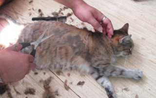 Варианты стрижки кошек