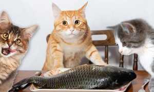 Сколько варить рыбу для кота