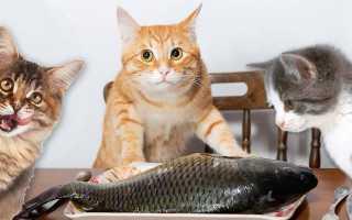 Можно ли давать рыбу