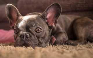 Популярные виды собак