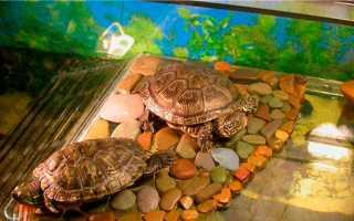 Плот для красноухой черепахи