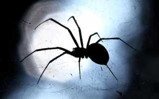 Нельзя убивать пауков примета